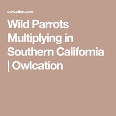 Wild Parrots Multiplying in Southern California | Owlcation