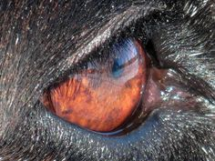 Mike, Lab/Pointer | by The Art of Nature...