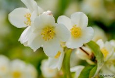 Aziz Nasuti Blog: Flowers of Botanical Garden in Trondheim