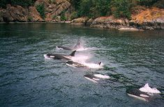 Watching orcas off Orcas Island