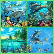 4 squares of dolphin's