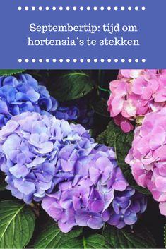 Outside Living, Outdoor Living, Growing Gardens, Climbing Roses, Take Me Home, Garden Plants, Hydrangea, Farmer, September