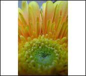 image 24560 @openphoto.net.net