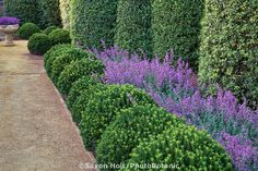 Layered planting with Euonymus japonicus 'Microphyllus' as small hedge with tall columns of Pittosporum tennifolium) with Catmint (Nepeta x faassenii 'Walkers' Low) in formal garden. Front Gardens, Formal Gardens, Outdoor Landscaping, Front Yard Landscaping, Landscaping Ideas, Dollhouse Landscaping, Landscape Design, Garden Design, Landscape Architecture