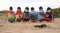 PHOTO: Penguins are seen in their sweaters at Phillip Island, Australia in this March 2014 file photo.
