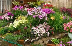 Plante perene de vara cu flori divers colorate