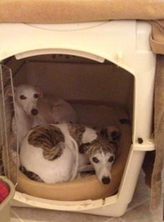 To Crate or Not to Crate – and for How Long?   Best In Show Daily   2013