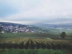 Best Day Trips from Belgium // vineyards in Epernay, Champagne region of France | MontgomeryFest
