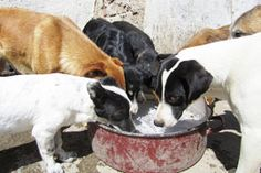 Monthly expenses for these dogs in Serbia are:  - 3,600 Euros for dog food ($4,698 US dollars)  - 960 Euros to pay the workers ($1,252 US dollars)  - 150 Euros for rent/electricity/water ($195 US dollars)  - And an average of 500 Euros for basic veterinary medicines ($652 US dollars).  We really need your help.  Donate at www.harmonyfund.org.