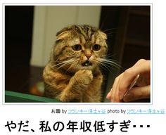 画像 : 【可愛い!】ネコだけをまとめたボケて傑作選【ハイレベル】13/01/03 更新! - NAVER まとめ