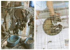 Gecko and Chivet at PASTY  Contax 137MD Quartz | Carl Zeiss Planar 50mm f/1.7 T* | Fujifilm Superia 200 (2008) Zeiss, F 1, Fujifilm, Quartz, Quartz Crystal