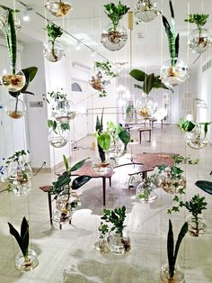 200 Indoor Gardens Ideas Indoor Gardens Plants Indoor Plants