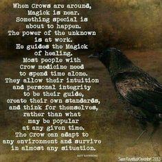 Crow Spirit Animal, Animal Spirit Guides, Animal Meanings, Animal Symbolism, Crow Meaning, Crow Tattoo Meaning, Crow Totem, Raven Totem, White Bird Tattoos