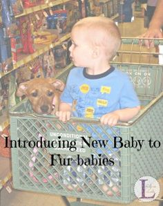 Introducing New Baby to Fur-babies