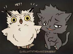 owl : bokuto...cat : kuroo