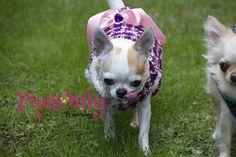 Diseño de Moda Canina. Comoda y Libertad de Movimientos.