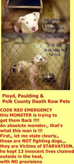 """Animal control has said that we have clearance to """"GET THE OTHERS OUT of here !!"""" WE MUST FIND SALVATION FOR THEM --- FAST !!! This sicko has already contacted the shelter,,, he WANTS THEM BACK. And I want to get them out before there are any """"legal loopholes"""" that he could use. https://www.facebook.com/SavingPauldingCountyPets/photos/a.505955629496442.1073741860.376306482461358/856057457819589/?type=3&theater"""