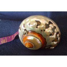 Rare & Unusual Antique Victorian Sea Shell Pin Cushion Tape Measure