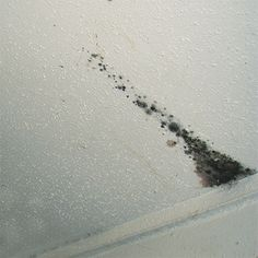 To remove mold from popcorn ceilings is a challenge ...