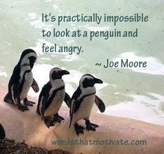 Penguin | Words That Motivate I need this in a picture frame.