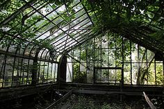 Greenhouse sun and shadow (Curious Expeditions) Tags: urban plants abandoned overgrown ruins factory decay greenhouse urbanexploration exploration greenhouses
