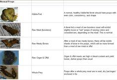 Poop chart   The Holistic Ferret Forum