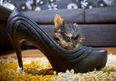 The world's smallest dog