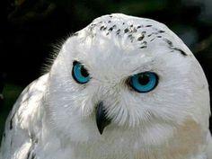 The eyes amaze me