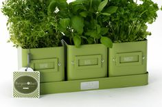 Herb Pots in a Tray