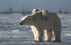 hitching a ride with mom