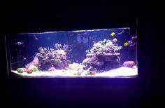 orphek led lighting foot deep aquarium