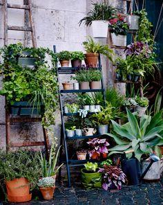 En pidestall formet som en stige, der det står blomsterpotter i terrakotta og galvanisert stål med grønne planter i.