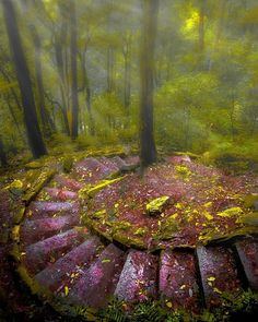 """9,089 Likes, 65 Comments - EARTH FOCUS (@earthfocus) on Instagram: """"'Downward spiral' From the national pass walk in the blue mountains, NSW #Australia  Photo by…"""""""
