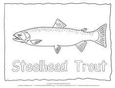 steelhead trout coloring pagetrout pictures outlines for fish coloring pages steelhead trout outline