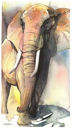 """Elephant"" ... by Jennifer Kraska, January 2008. Watercolor and pen."