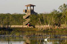 "Brazos Bend State Park - Needville, Texas = camping, picnic, hiking, biking, horseback riding, fishing, six lakes, nature center, The George Observatory, gift shop, deer, alligators, ranger programs, ""tackle loaner program"""