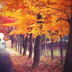Fall basic Life