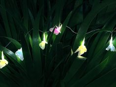 Solar power fibre-optic butterflies Solar Fairy Lights, Outdoor Fairy Lights, Party Lights, Chandelier Lighting, String Lights, Solar Power, Christmas Lights, Butterflies, Plants