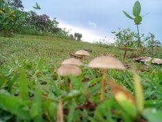 The wild mushrooms