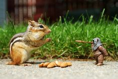 """Cute chipmunks playfully interact with """"Star Wars"""" toys in Chris McVeigh's fun photos. #photography #StarWars"""