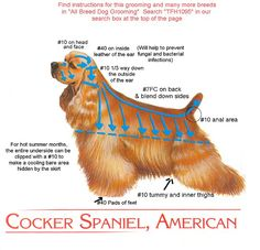 Cocker cut instructions for groomer