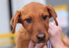 Adoptable Dog of the Day: Athena in Washington