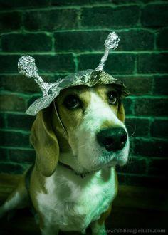 2/365 - Tin Foil Hat - http://www.365beaglehats.com/2365-tin-foil-hat/