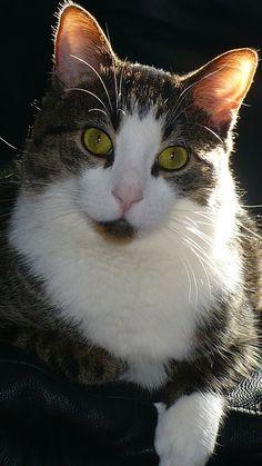 Dawnleap female Moonclan she cat Kayceecat's cat