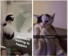 25 Funny Animal Pictures Of The Day #funny #picture