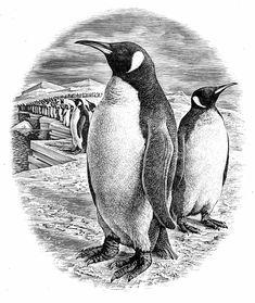 Andrew Davidson, wood engraving for Penguin Books