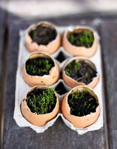I started some chive seeds in egg shells as an Easter party favor of sorts. I of course did not come up with the idea of starting seeds in egg shells; in fact, I ran across a very similar project on Say Yes To Hoboken just the other day. That...