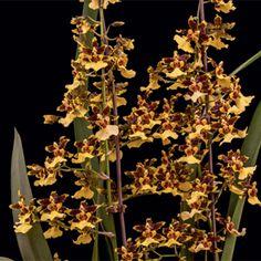 Como Cultivar Orquídeas Saiba como plantar orquídeas em árvores Ver passo a passo agora Cultivar a si mesmo Matéria disponível apenas na revista A Soberana Matéria disponível apenas na revista… leia mais →