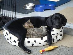 Bed for Two
