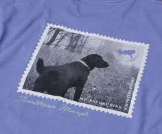 Southern Marsh Collection — Southern Marsh Black Lab